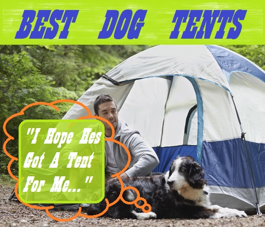 Best Tents For Dogs My Top 5 Reviews