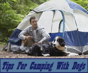 Tips For Camping With Dogs
