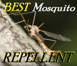 Best Mosquito Repellent For Camping